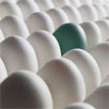 one_green_egg_100x100